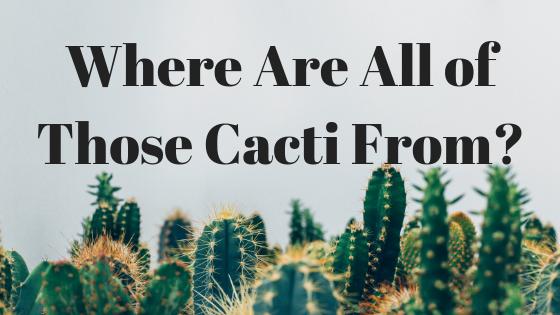 Friedrich's Cacti